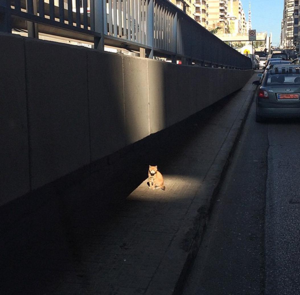 Cat on the street.