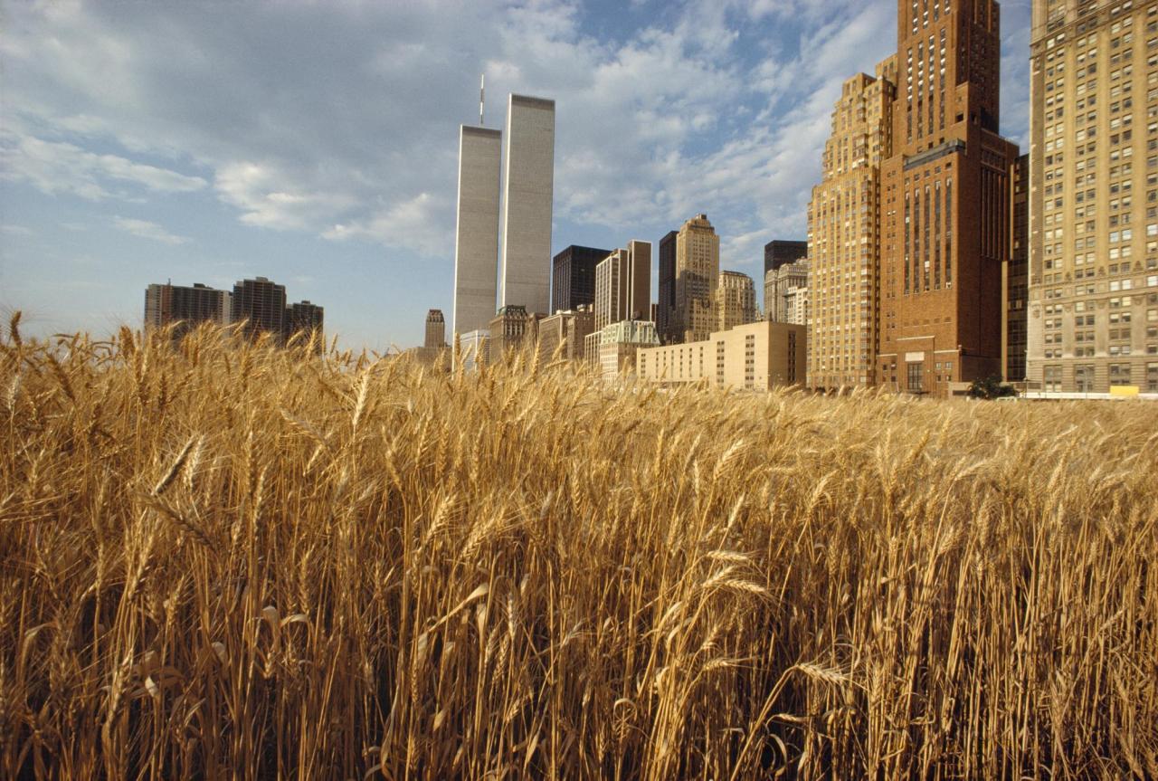 Agnes Denes, Wheatfield – A Confrontation: Battery Park Landfill, Downtown Manhattan – With New York Financial Center , 1982
