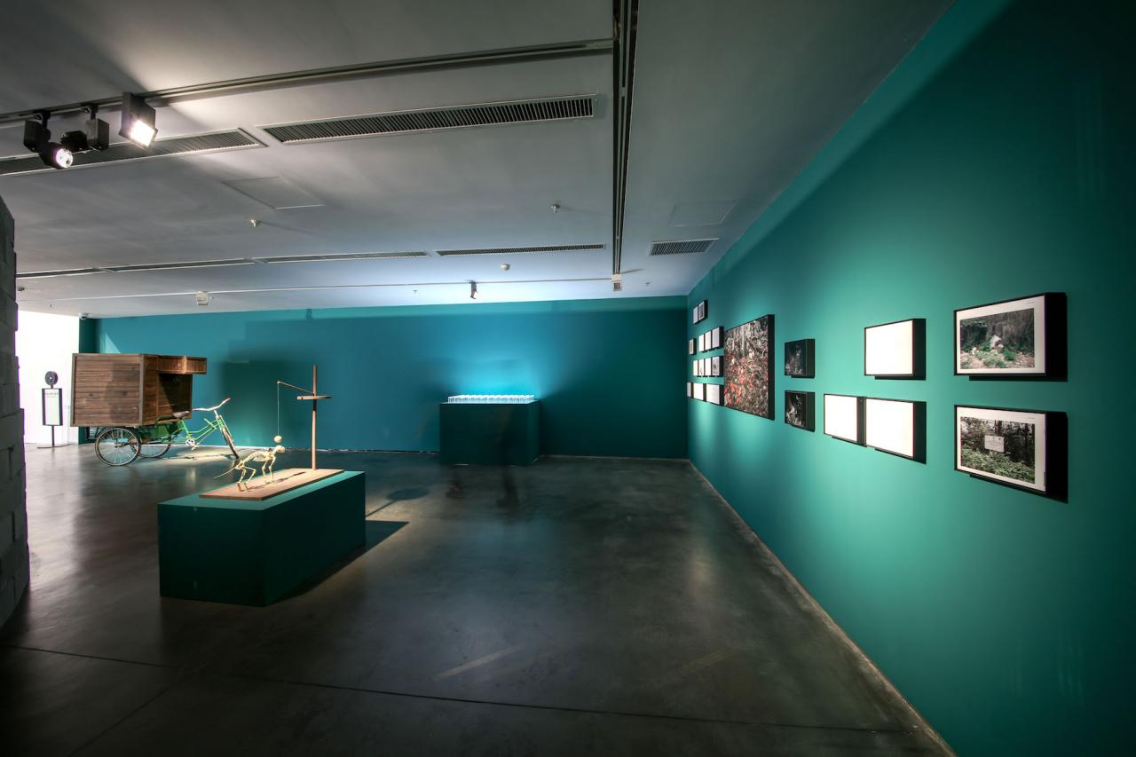 Robert Zhao Renhui Installation view © Photo: Courtesy the Yinchuan Biennale