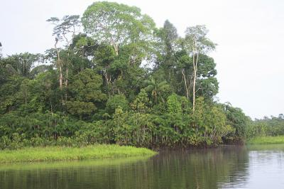Yasuní National Park. In 2008, the people of Ecuador amended their constitution to recognise the inherent rights of nature.