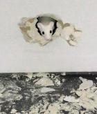 """""""Und ganz hinten entdeckte ich sie. Die Maus."""" (In der Galerie Esther Schipper)"""