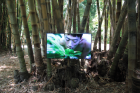 Zheng Bo, Pteridophilia, 2016 – Video, 37', installation view, Botanical Garden, Palermo